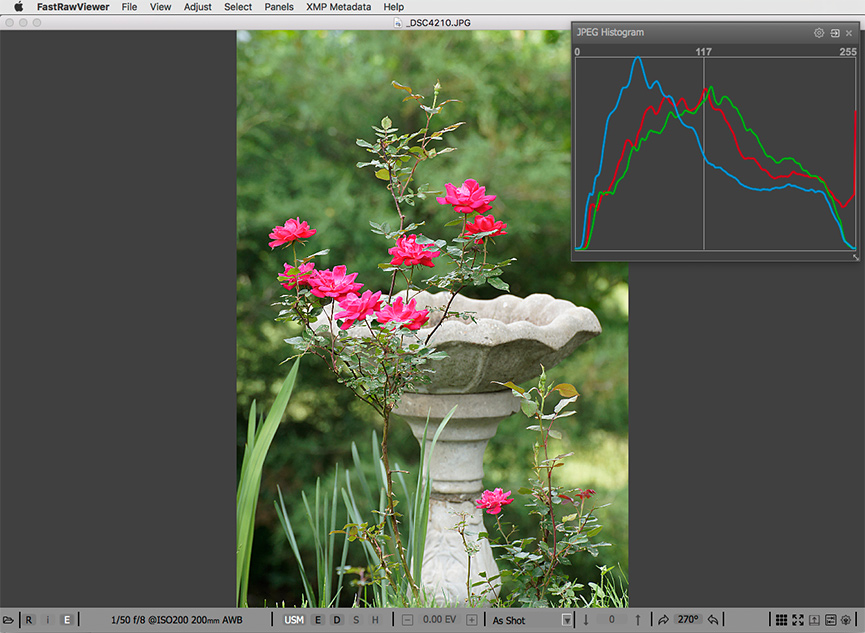 Red roses. Embedded JPEG and JPEG histogram