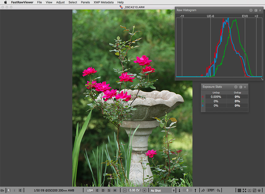 The same shot of red roses. RAW and RAW histogram