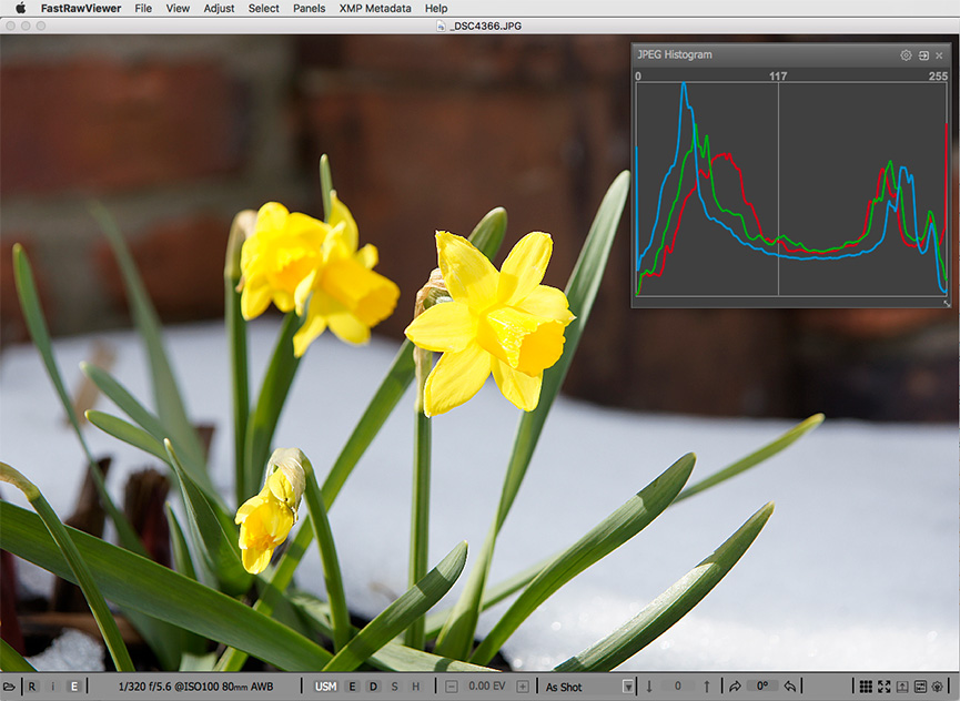 Yellow daffodils. Embedded JPEG and JPEG histogram