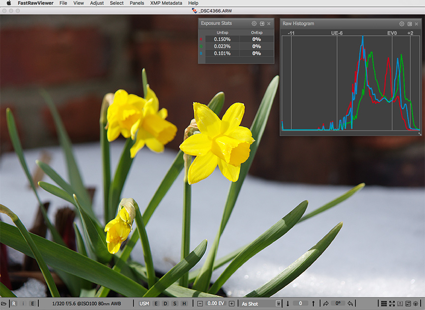 The same shot of yellow daffodils. RAW and RAW histogram