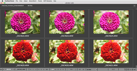 FastRawViewer. Grid View. Red Flowers