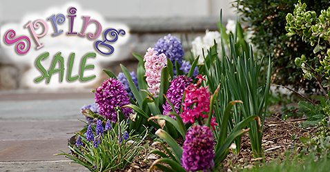 LibRaw Spring Sale