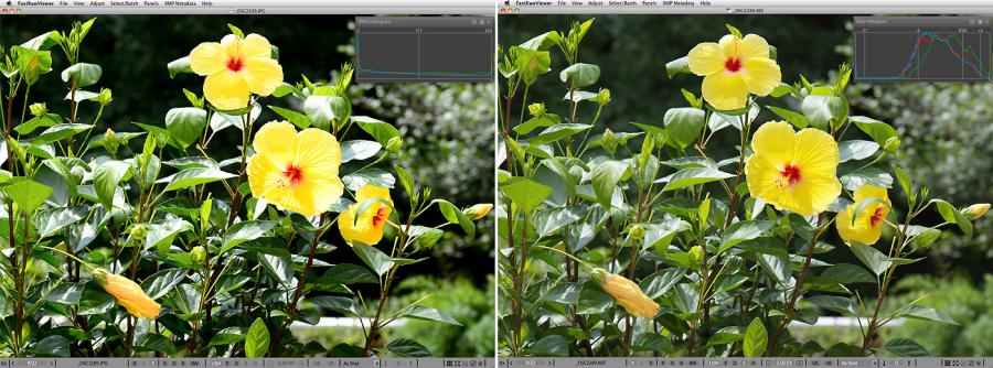 FastRawViewer. JPEG preview vs RAW