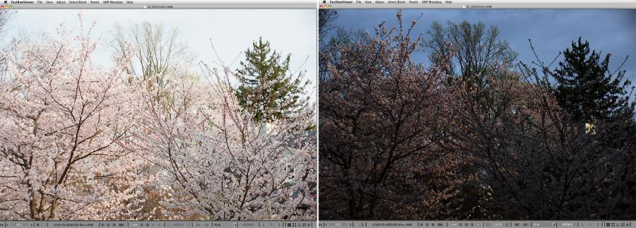 FastRawViewer. Cherry Blossom. Highlight Inspection
