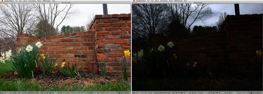 FastRawViewer. Daffodils and overcast sky. Highlight Inspection