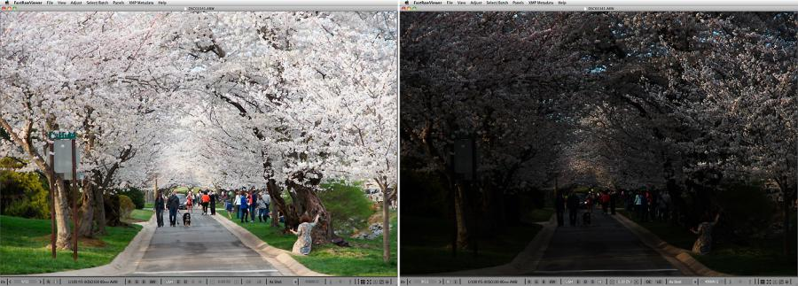 FastRawViewer. Cherry Blossoming Alley. Highlight Inspection