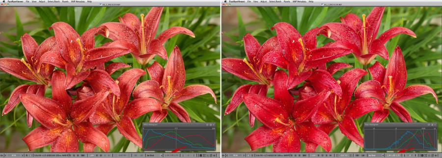 FastRawViewer. Red Lilies. False clipping due to white balance application
