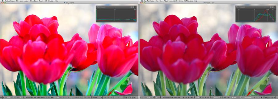 FastRawViewer. Red Tulips. False clipping due to white balance application