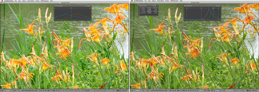 FastRawViewer. Orange Irises. False clipping due to white balance application